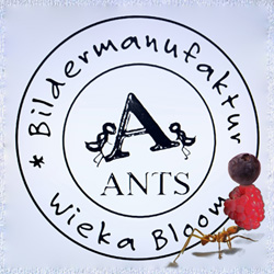 Ants by Wieka Bloom